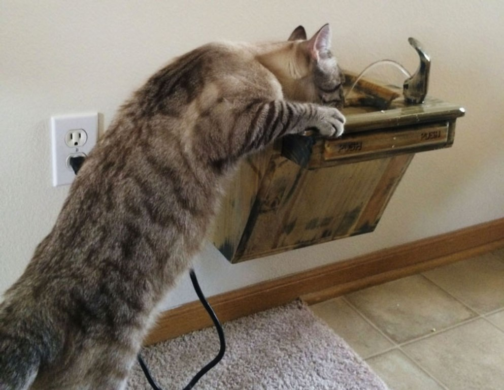 Image of: Cat Drinking Fountain Battery Operated