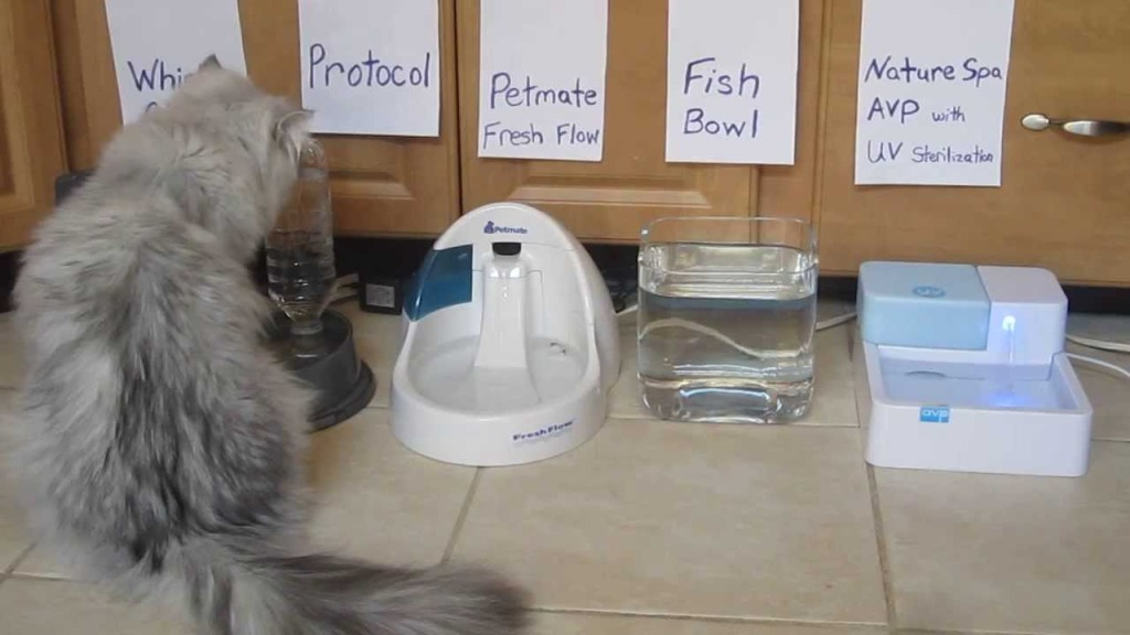 Image of: Cat Drinking Fountain Run On Batteries
