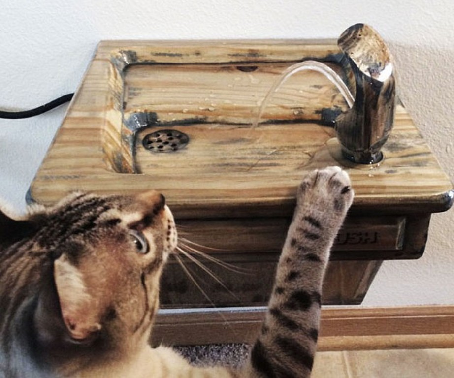 Image of: Cat Drinking Fountain Stainless Steel
