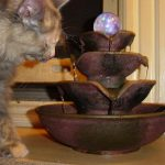 Cat Drinking Fountain Waterfall