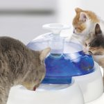 Cat Fountains Water