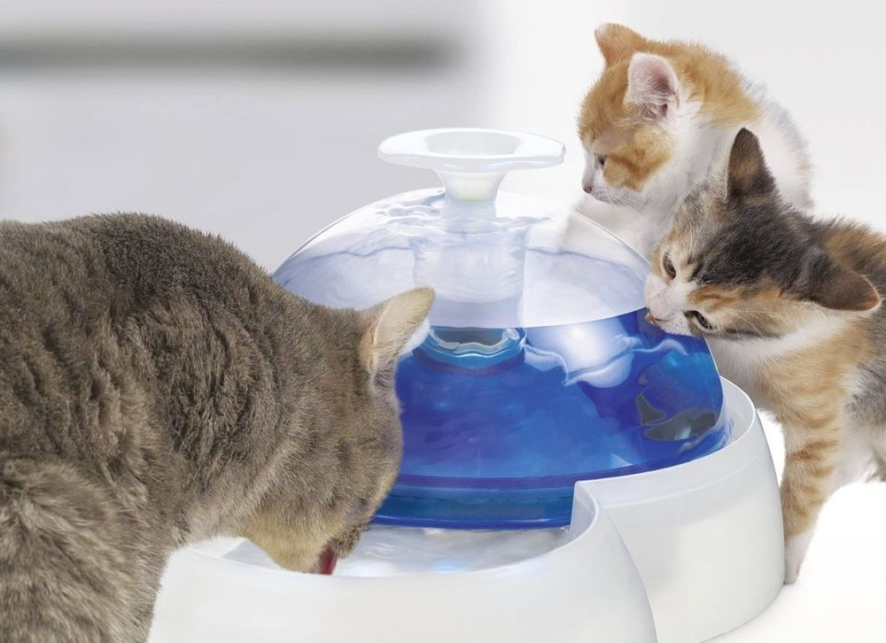 Image of: Catit Fountain Drink