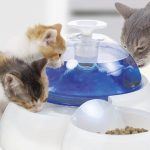 Catit Fountain Water