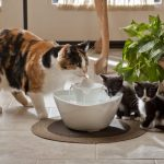 Ceramic Pet Fountain Bowl