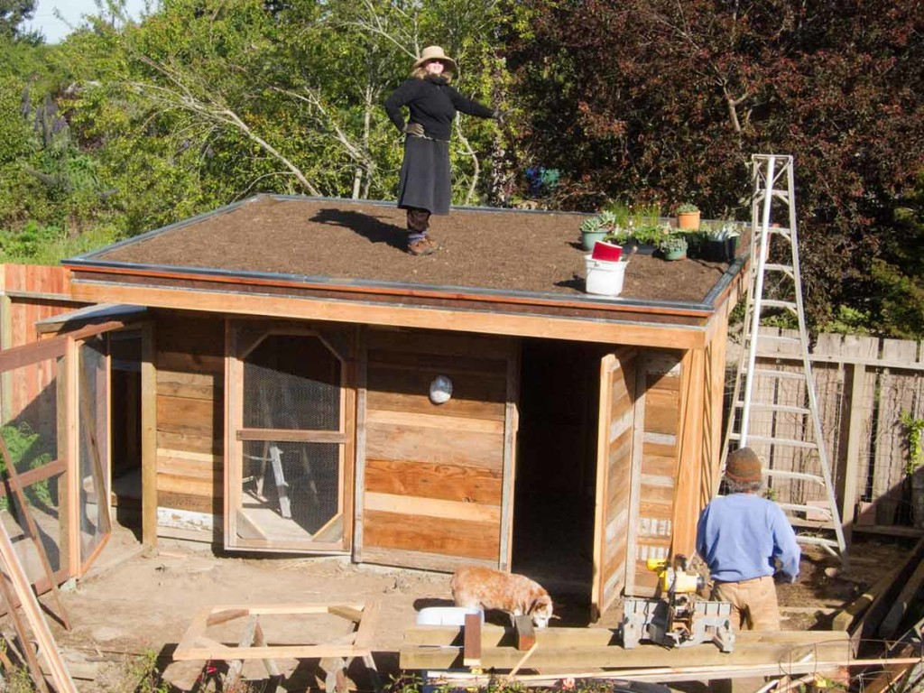 Image of: Chicken Coop Roof Top DIY Supplies