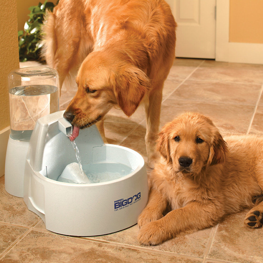 Image of: Drink Well Big Dog Pet Water Fountain Designs Ideas