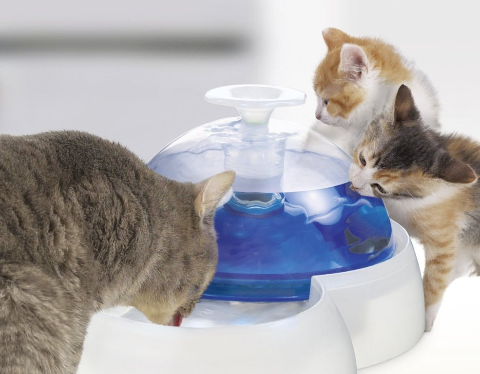 Image of: Martha Stewart Cat Drinking Fountain