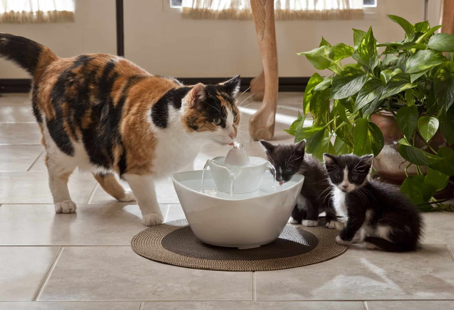 Image of: Small Cat Water Fountain Ceramic