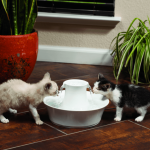 The Best Cat Drinking Fountain