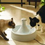 Cat and Dog Water Bowl Fountain