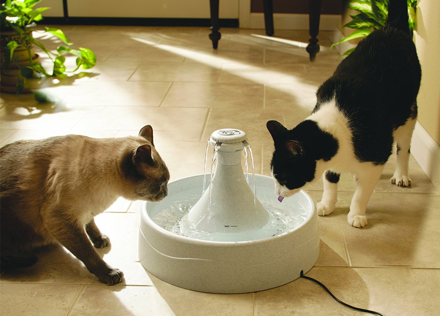 Image of: Cat and Dog Water Bowl Fountain