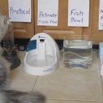 Choosing Dog Water Bowl Fountain