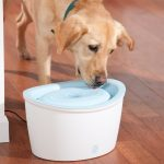 Clear Dog Drinking Fountain