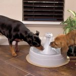 Dog Drinking Fountain Small