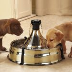 Dog Water Bowl Fountain Designs