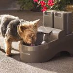 Dog Water Fountain Outdoor Boxer