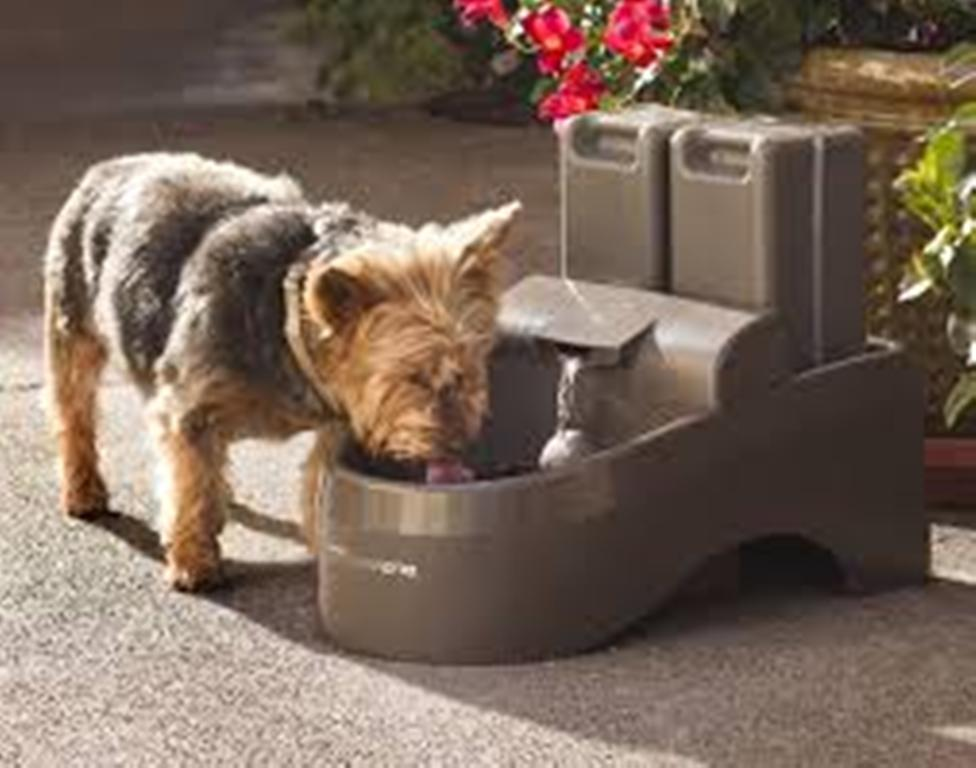 Image of: Dog Water Fountain Outdoor Boxer