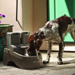 Dog Water Fountain Outdoor Cold