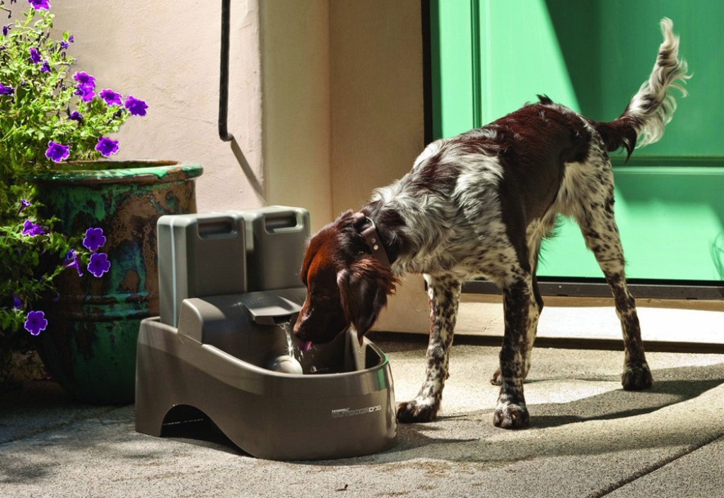 Image of: Dog Water Fountain Outdoor Cold