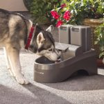 Dog Water Fountain Outdoor Funny