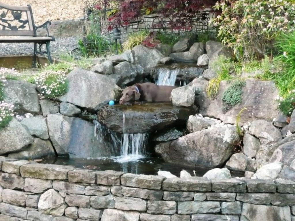 Image of: Dog Water Fountain Outdoor Garden