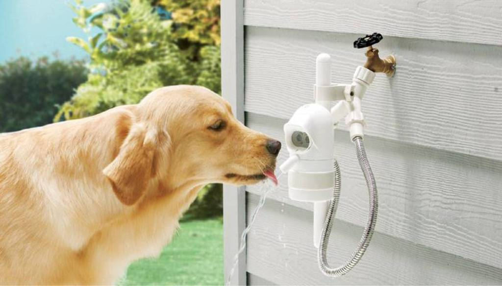 Image of: Dog Water Fountain Outdoor Step on