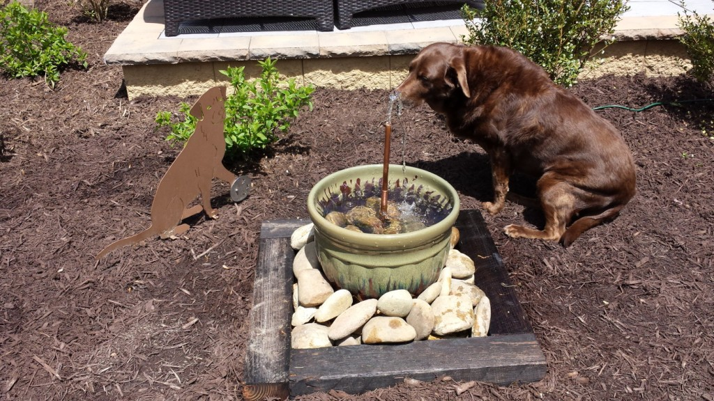 Image of: Dog Water Fountain Outdoor for Park