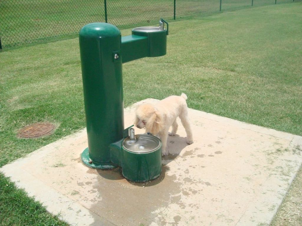 Image of: Dog Water Fountains Benefits