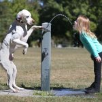 Dog Water Fountains Best