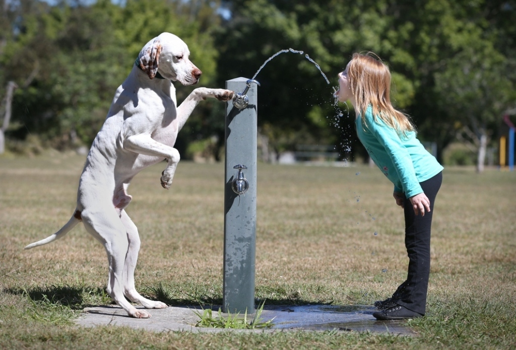 Image of: Dog Water Fountains Best