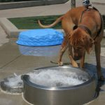 Dog Water Fountains Toy