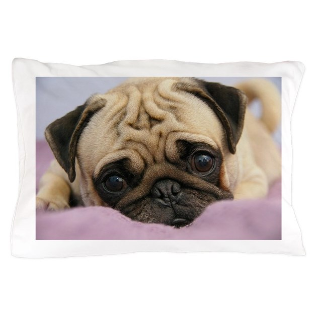Image of: Pug Pillow Addition