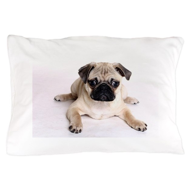 Image of: Pug Pillow White