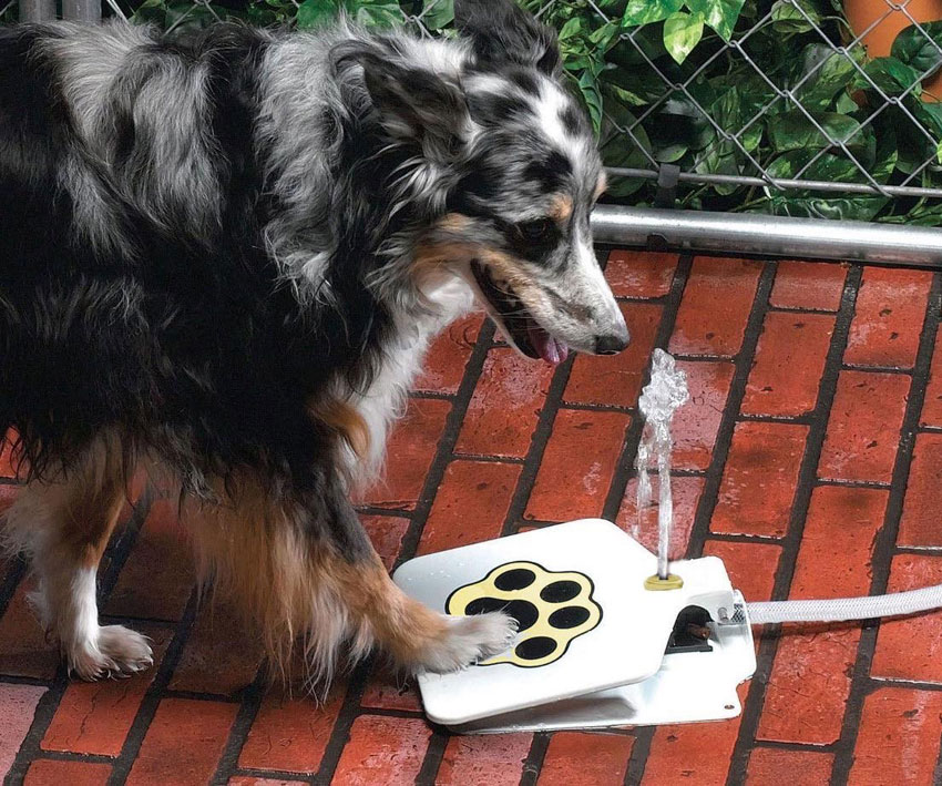 Spray Dog Drinking Fountain