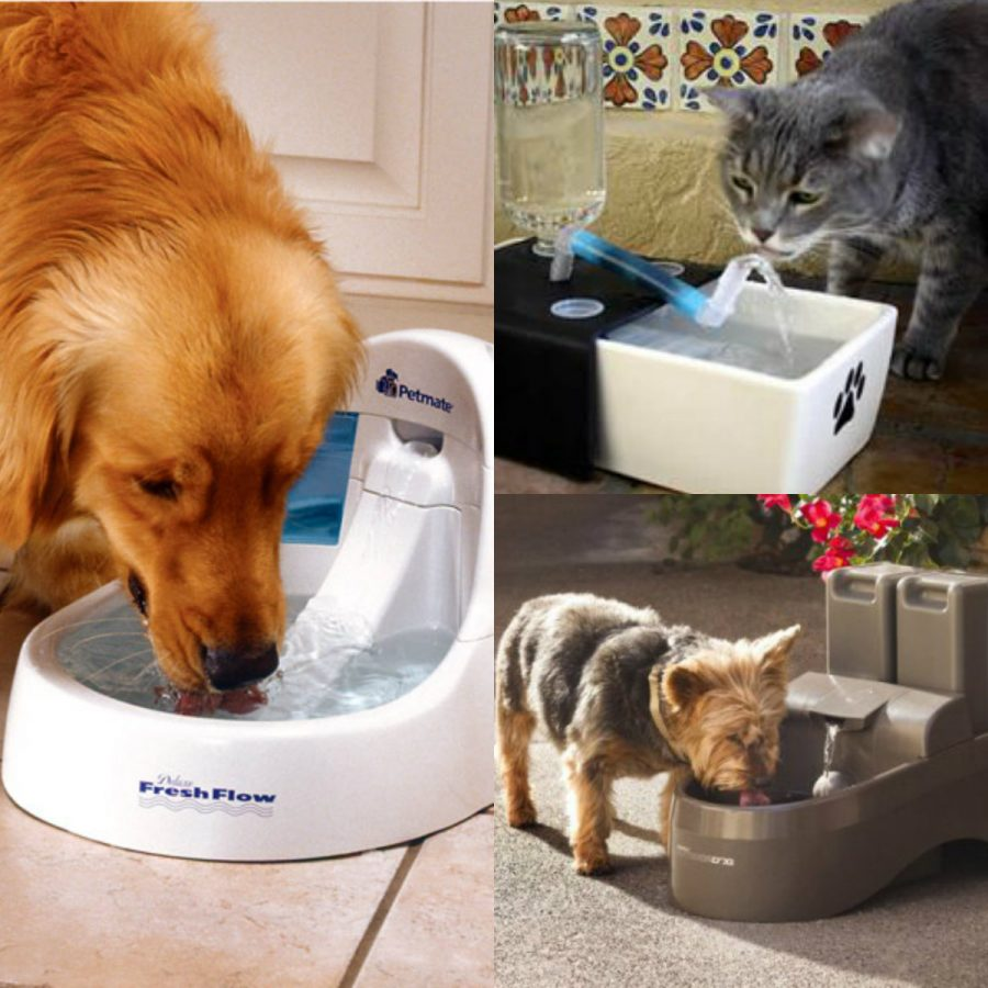 Image of: Stylish Dogit Water Fountain Design Ideas