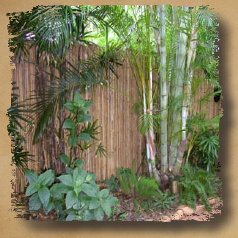 Image of: Bamboo Fence Roll Copper