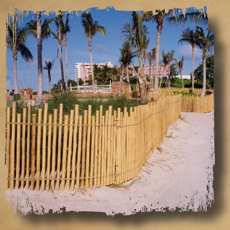 Image of: Bamboo Fencing Screening