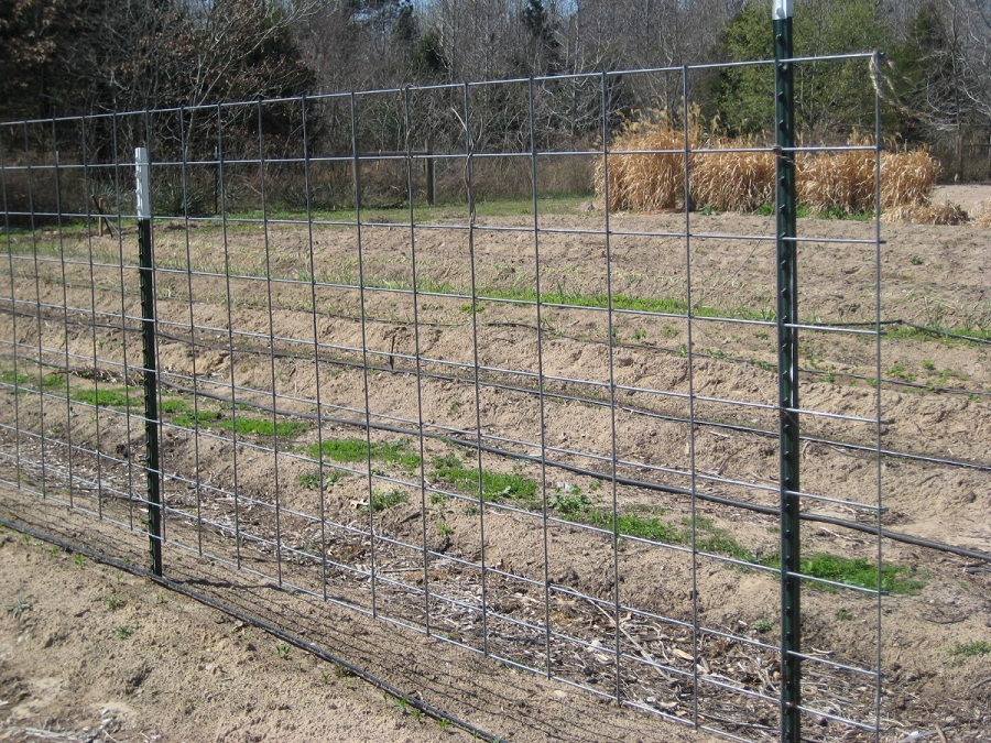 Build Cattle Fencing