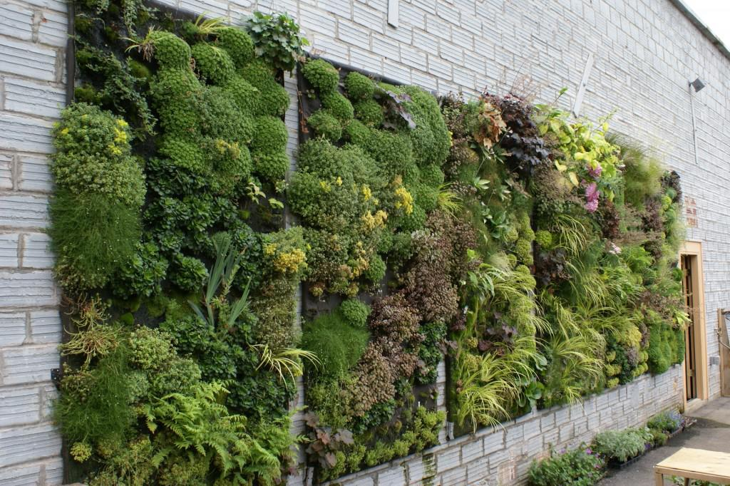 Image of: Best Plant Fence Ideas