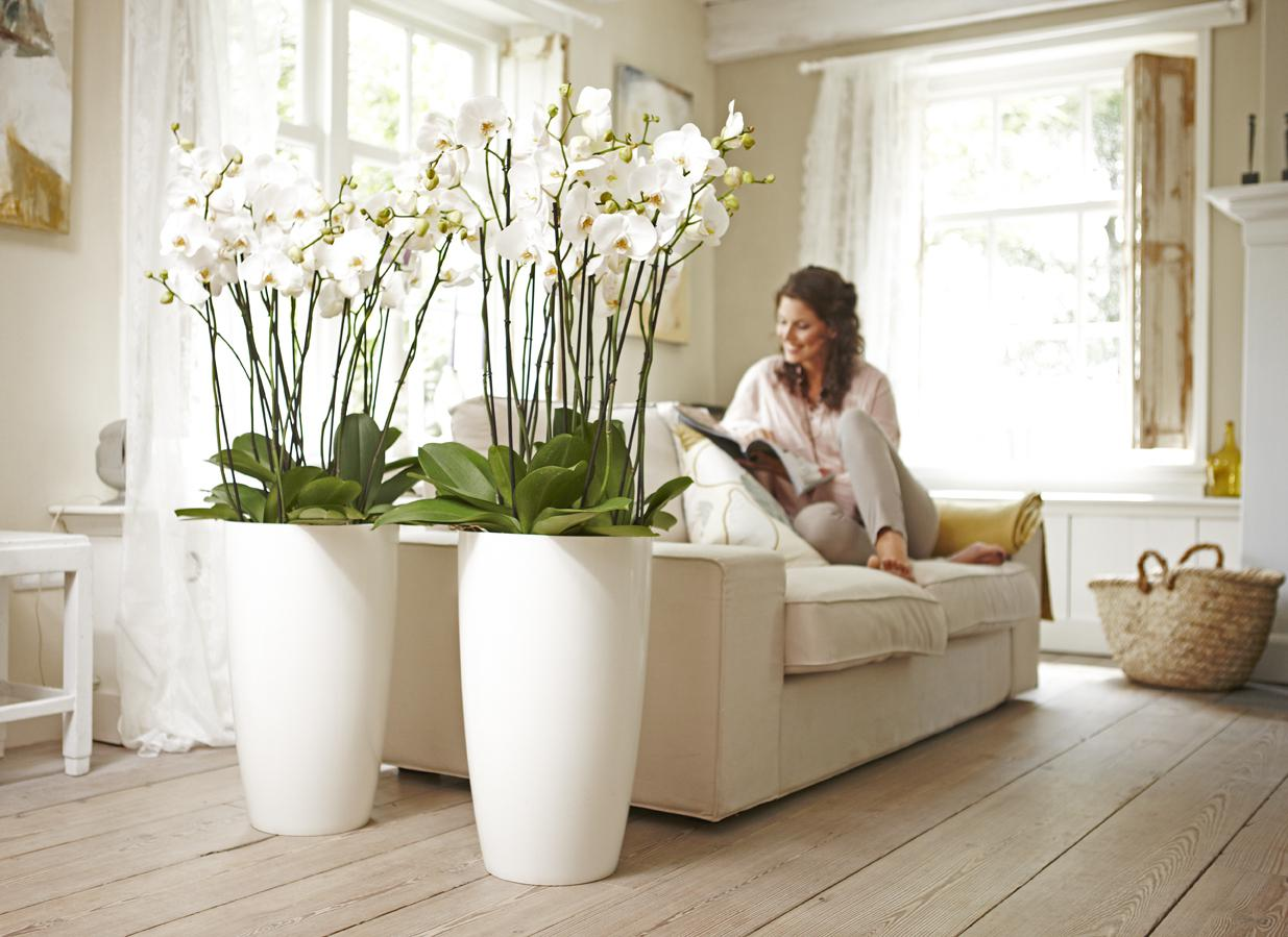 Image of: Flowers Decoration For Home