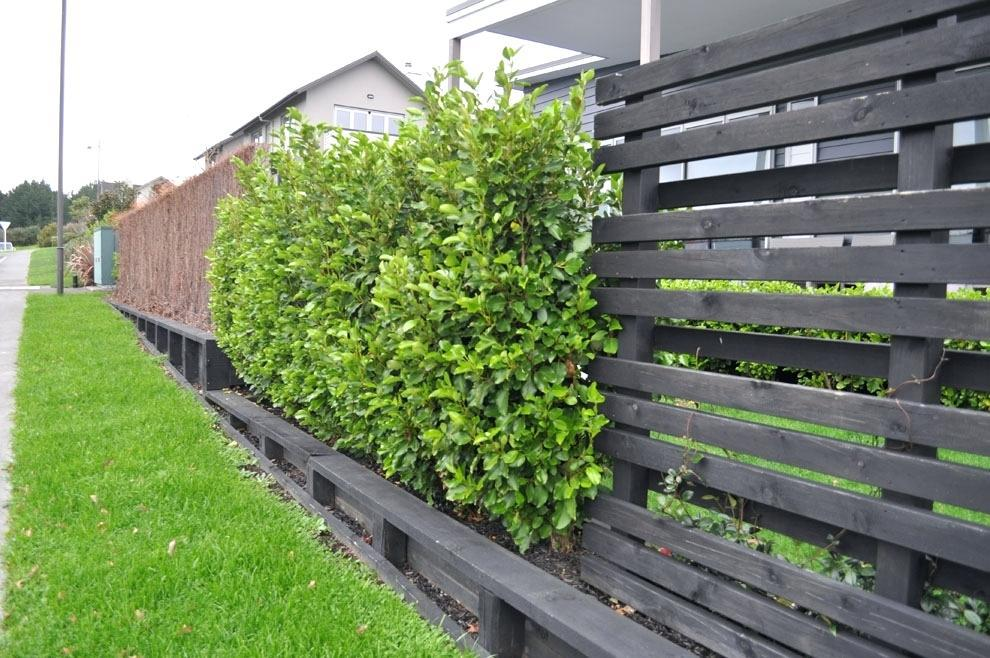 Image of: Natural Plant Fence Ideas
