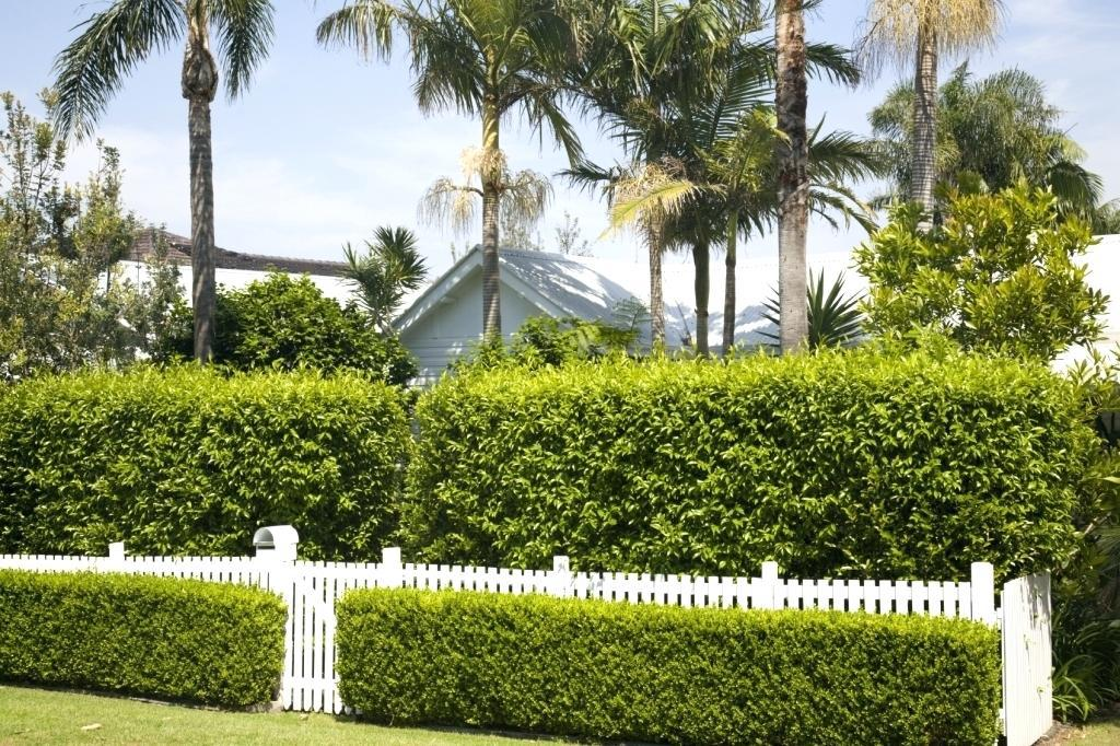 Image of: Natural Privacy Fence Plants