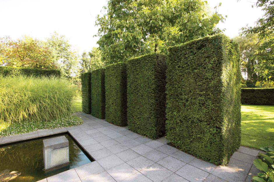 Image of: Amazing Plant Fence Ideas