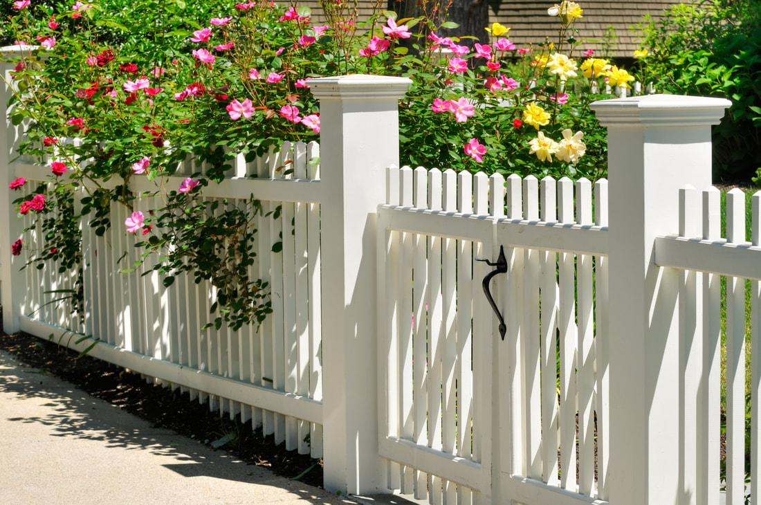 Image of: Plant Privacy Fence Ideas