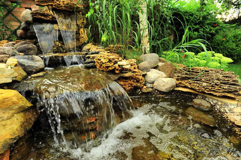 Image of: Plants Suitable For Around Waterfall Ideas