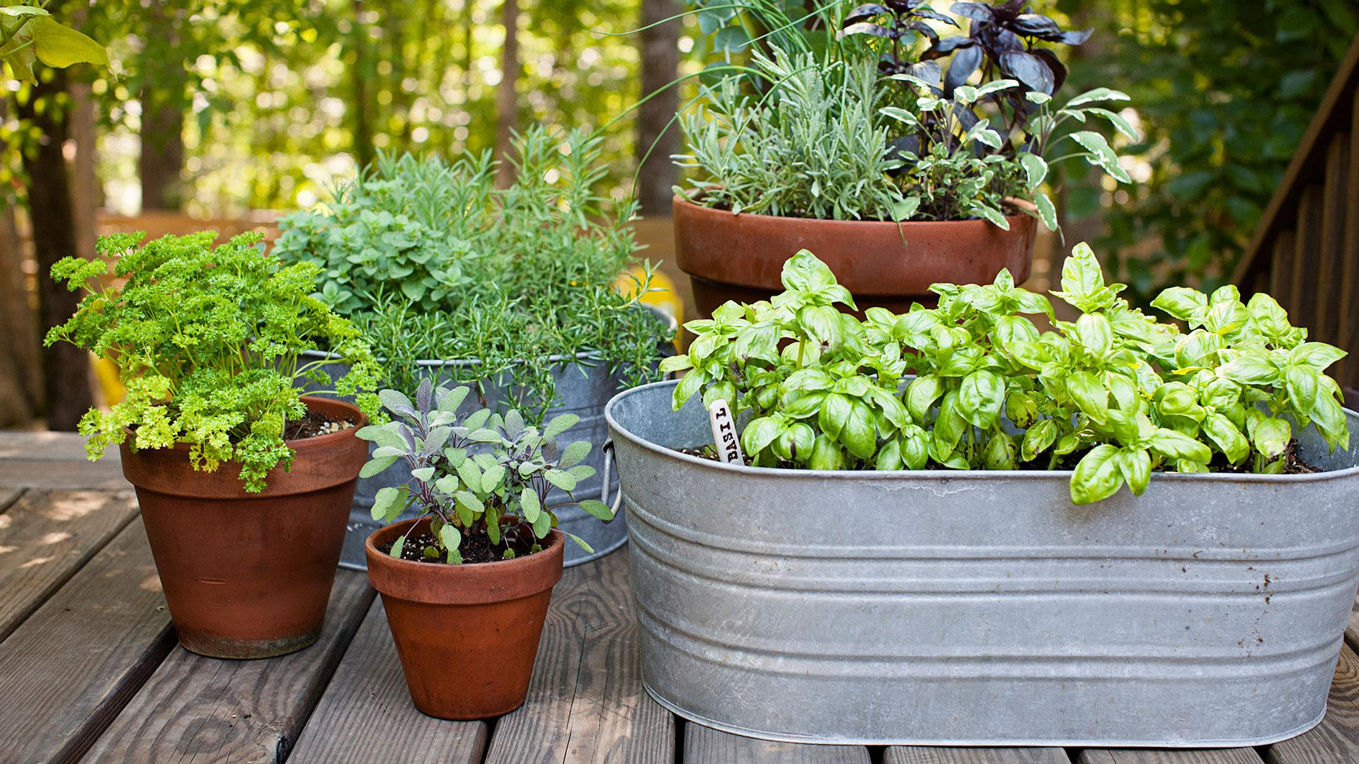 Image of: Small Space Gardening Images