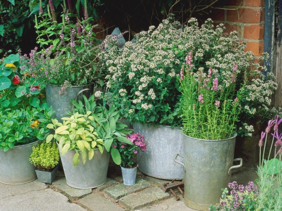 Image of: Small Space Gardening Plants