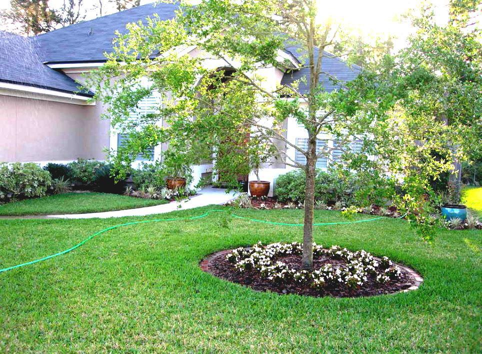 Image of: Small Trees For Landscaping Design