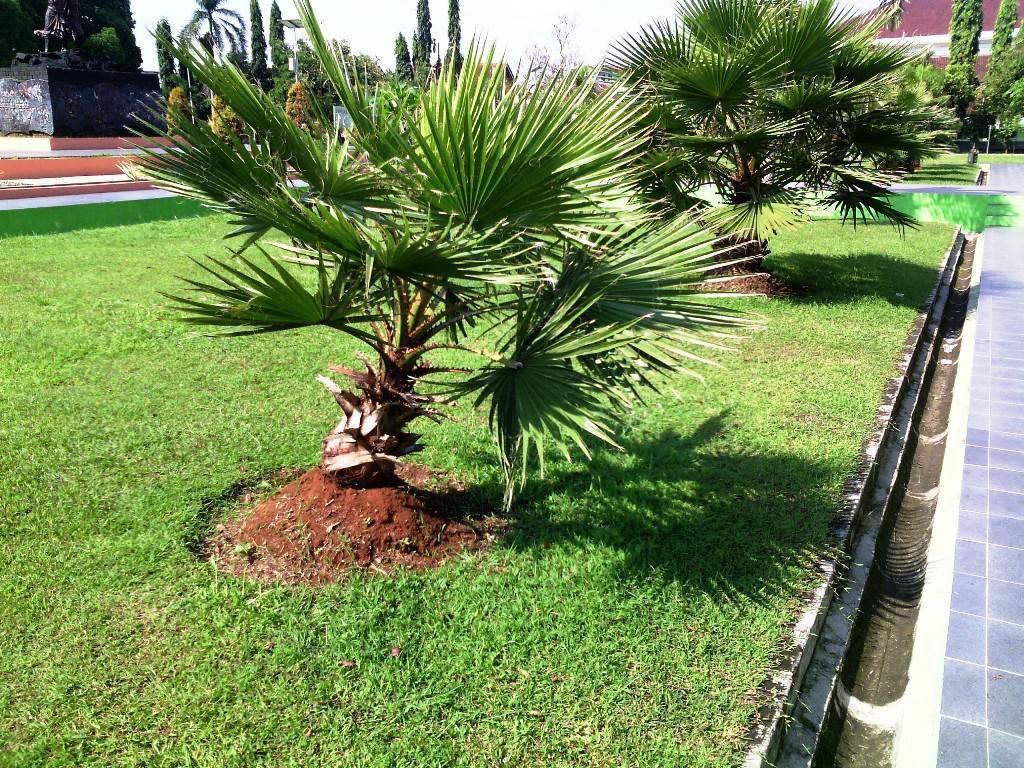 Image of: Small Trees For Landscaping Front Yard