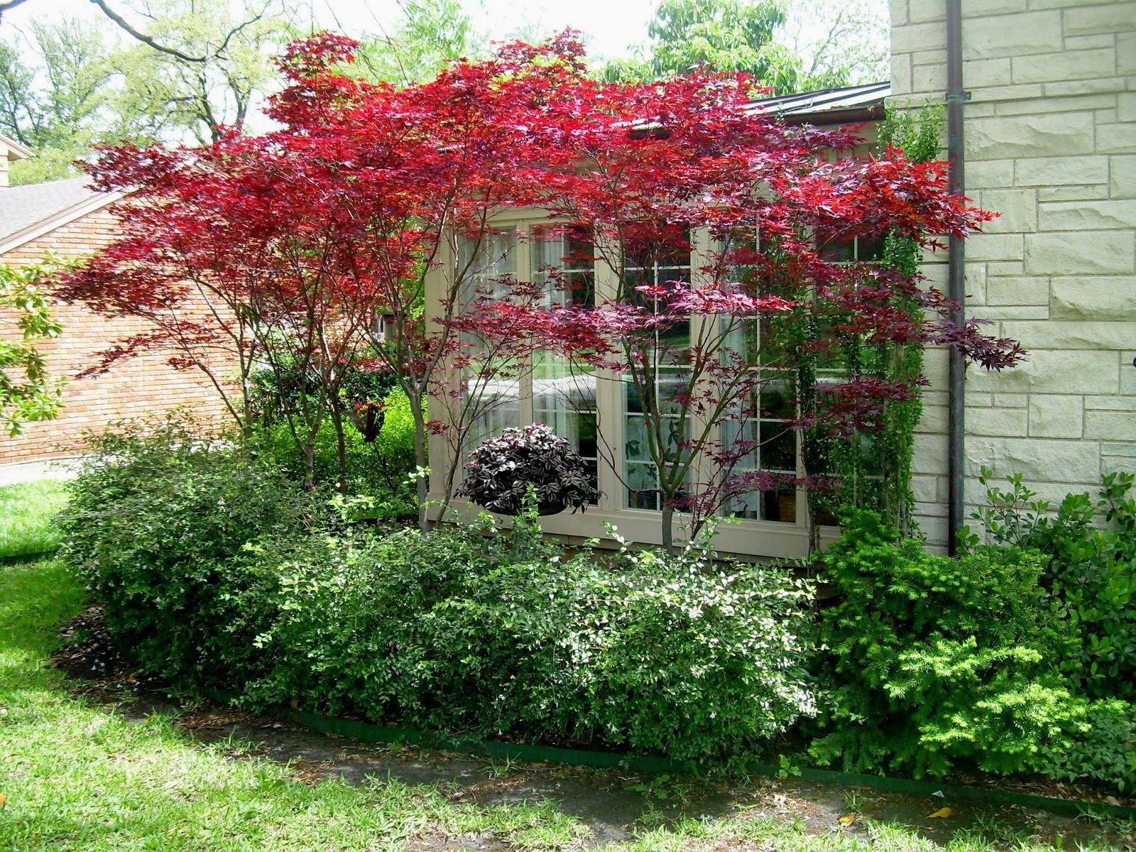 Image of: Small Trees For Landscaping Ideas